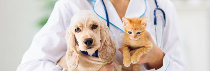Un vétérinaire